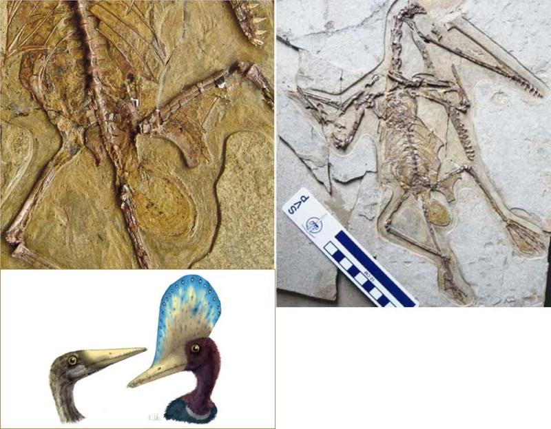Paleontologie, l'actu... Rtema137