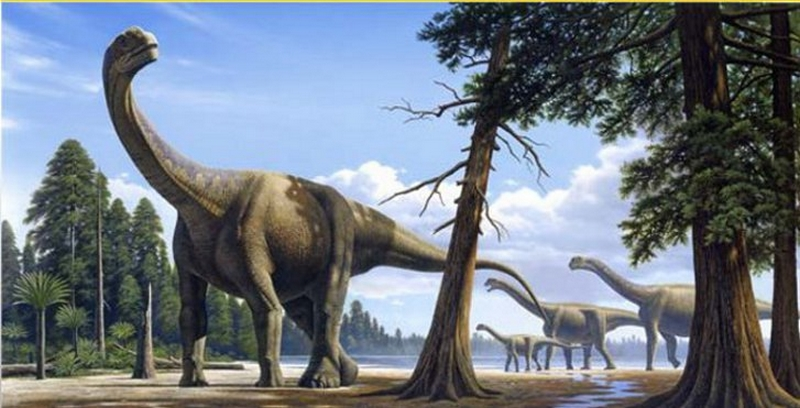 Paleontologie, l'actu... Rtema138