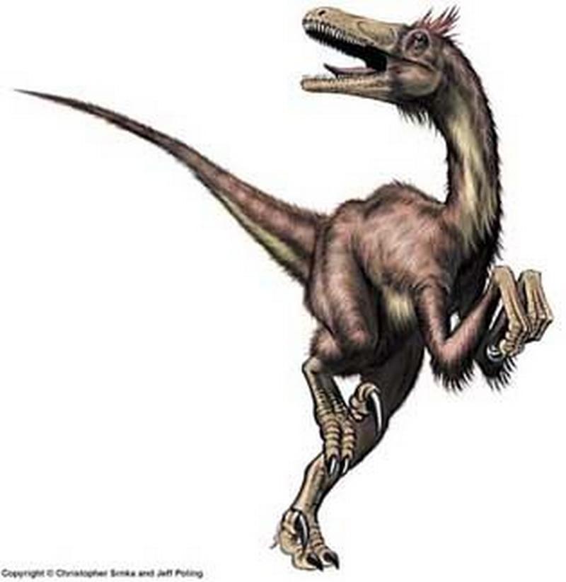 Paleontologie, l'actu... Rtema143