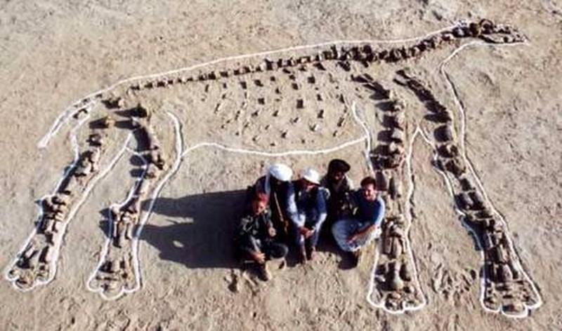 Paleontologie, l'actu... Rtema150