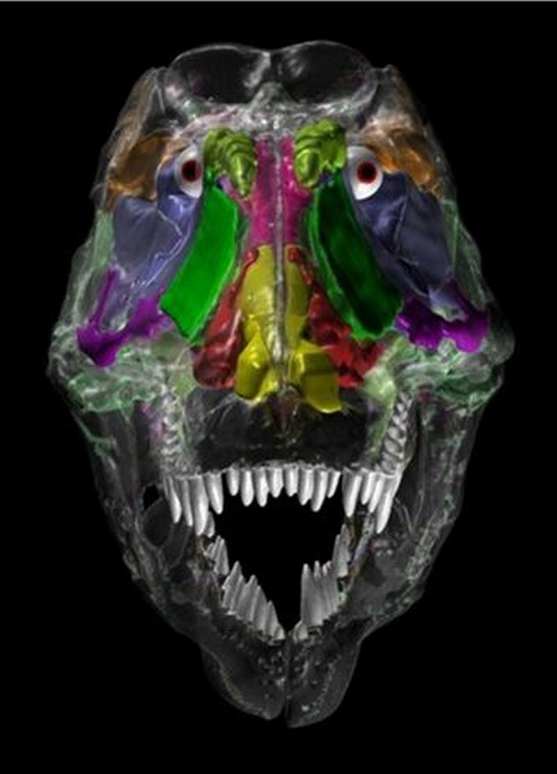 Paleontologie, l'actu... Rtema151