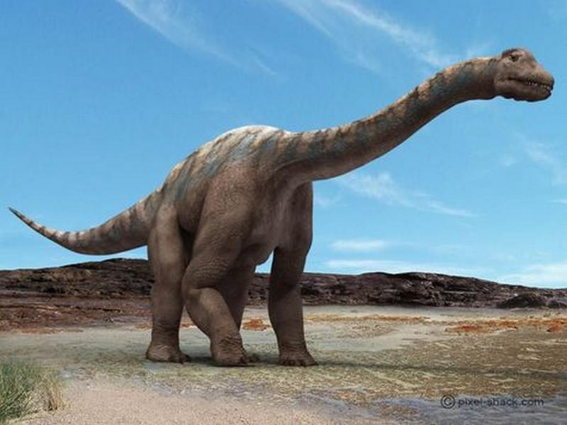 Paleontologie, l'actu... Rtema152