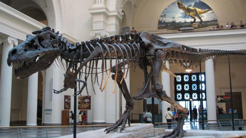 Paleontologie, l'actu... Tyrann10