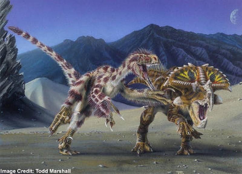 Paleontologie, l'actu... Veloci10