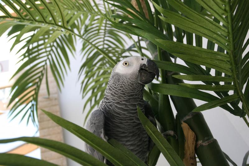 Le Monde des Perroquets Img_3312