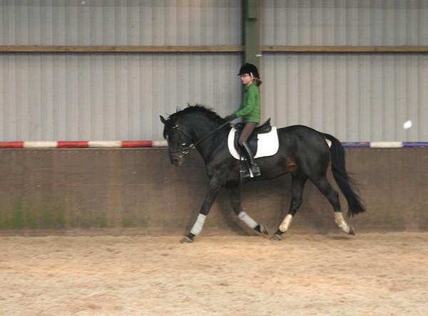 Croisement ponette - cheval St_1011