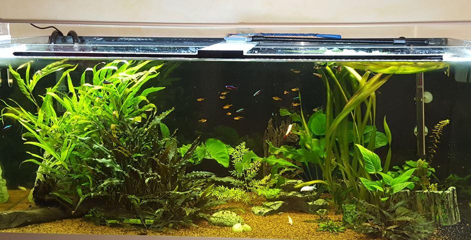 choix rampe aquarium 300 litres Aprzos10