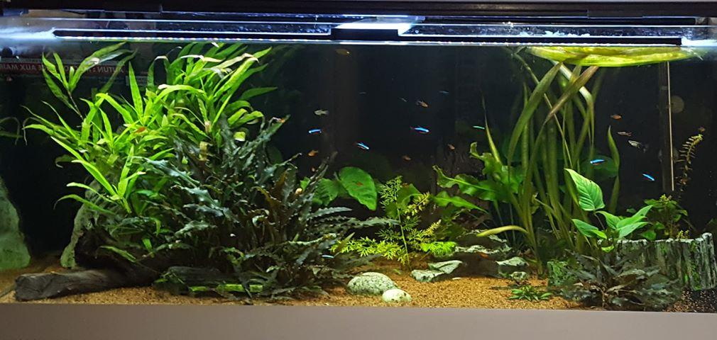 choix rampe aquarium 300 litres Avant11