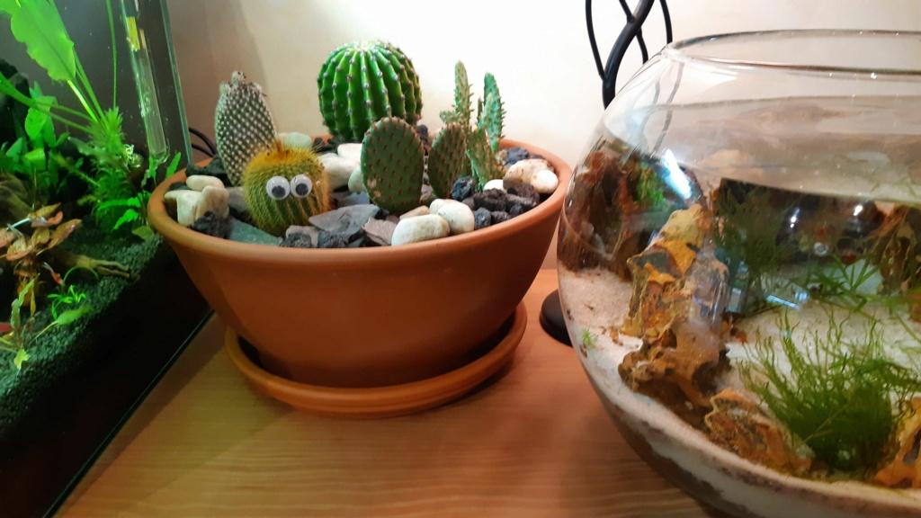 réfection 30 L dennerle pour killies Cactus10