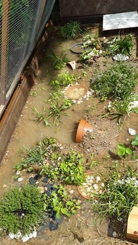 enclos inondé... Inonda10