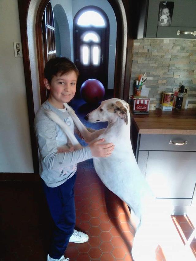 Debby adorable galga blanche tendre et câline Adoptée  - Page 3 Debby_10
