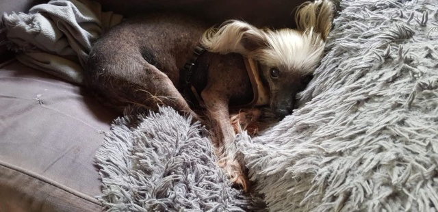 Dolly 10 ans ,sa maitresse part en maison de retraite  Dolly_11