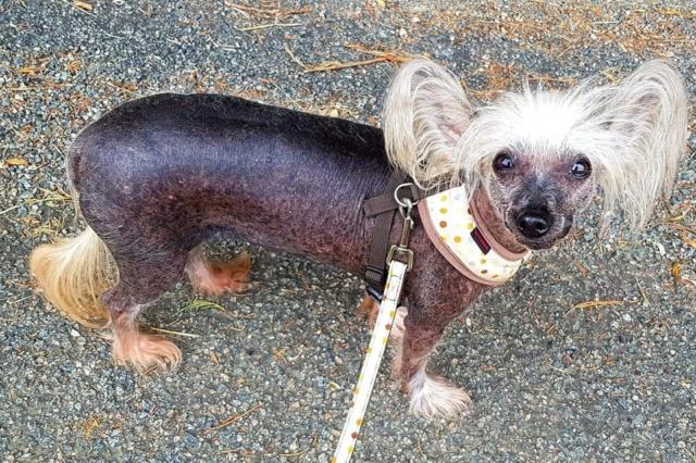 Dolly 10 ans ,sa maitresse part en maison de retraite  Dolly_12