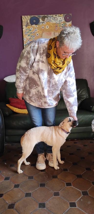 Lila petite croisée carlin de 9 mois Adoptée  Lila_a10