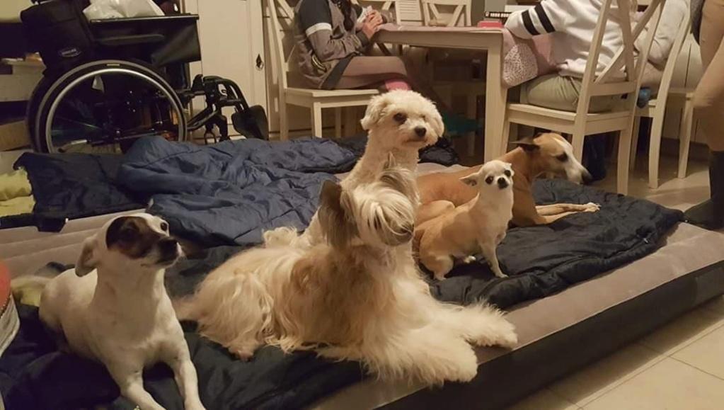 """Luna petite houpette de 9 mois """"chiens chinois à poils""""Adoptée  - Page 2 Luna_c10"""