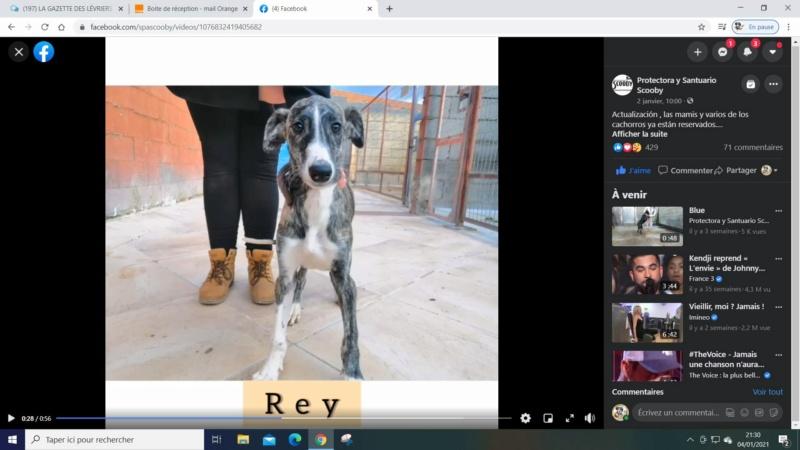 Rey galguito à l'adoption reservé  Rey_ga10
