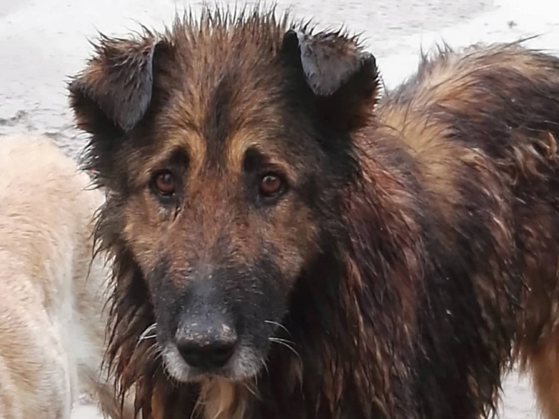 Rufus depuis tres longtemps à Scooby reservé Rufus10