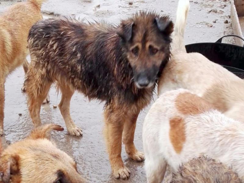 Rufus depuis tres longtemps à Scooby reservé Rufus_10