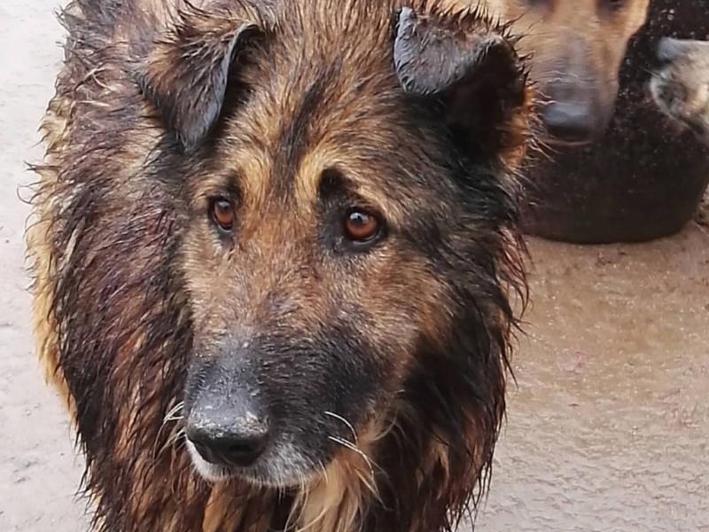 Rufus depuis tres longtemps à Scooby reservé Rufus_11