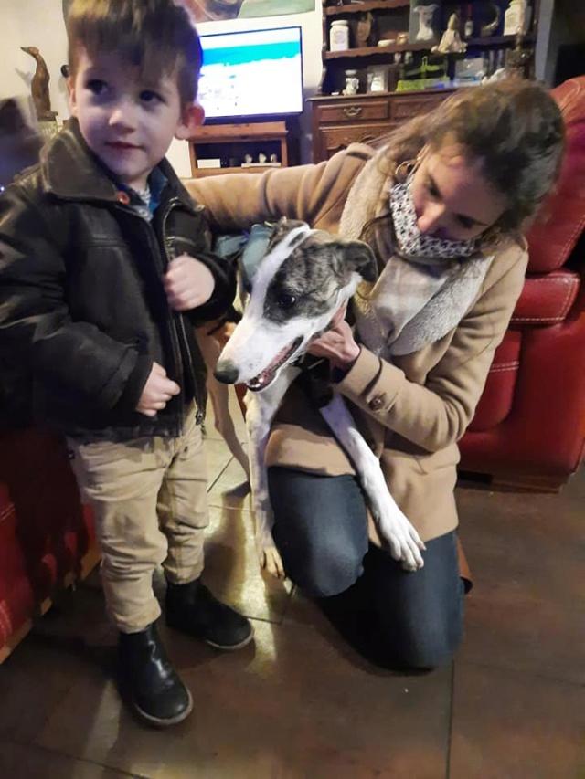 Malik Galguito à l'adoption  Scooby France reservé  Transp21