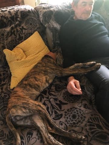 Adorable galguito à l'adoption Scooby France Adopté  Ullyss11
