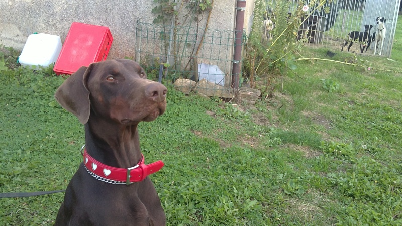 quand les gens confonde vos chiens avec une autre race!!! - Page 6 11092010