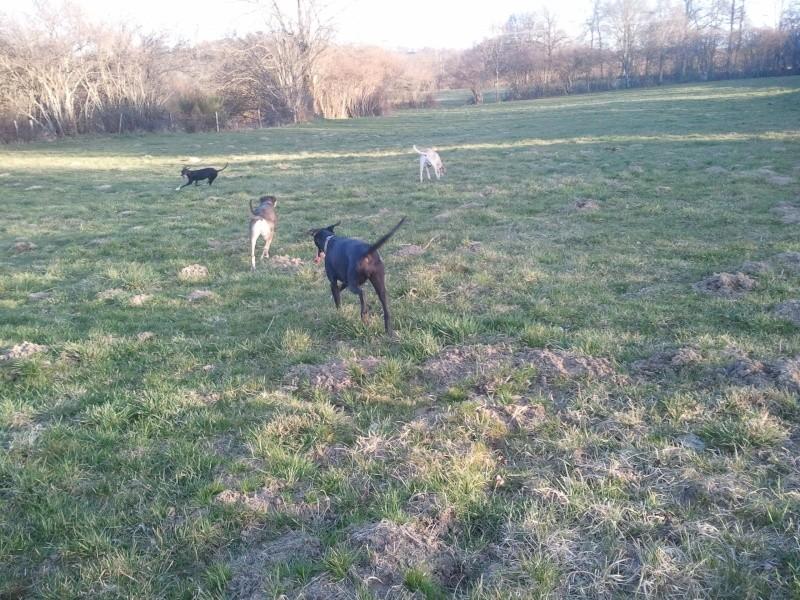 """Le team """"des chiens, des sport, une seule passion"""" - Page 3 2011-022"""
