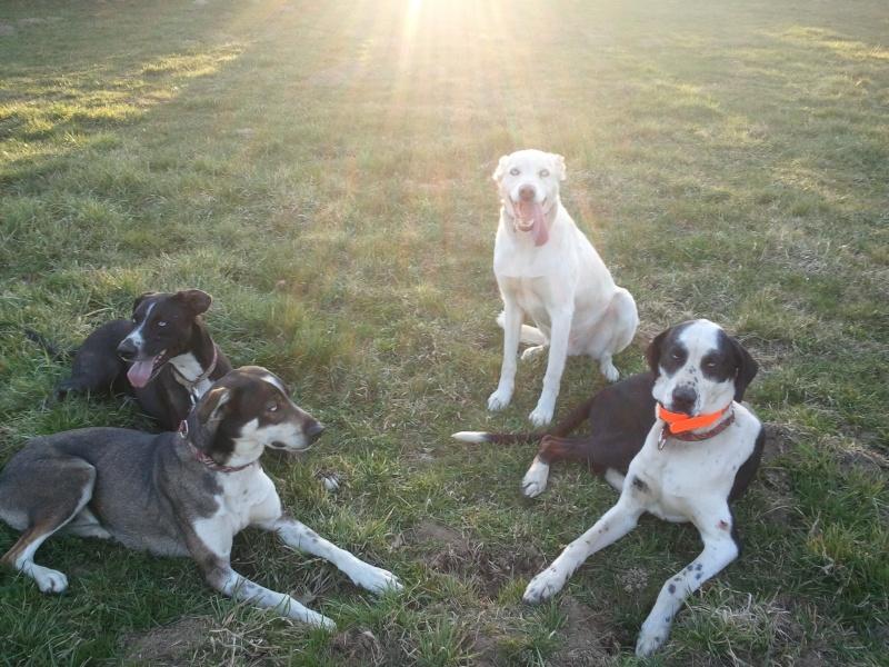 """Le team """"des chiens, des sport, une seule passion"""" - Page 3 2011-023"""