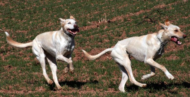 quand les gens confonde vos chiens avec une autre race!!! - Page 6 Mozart12