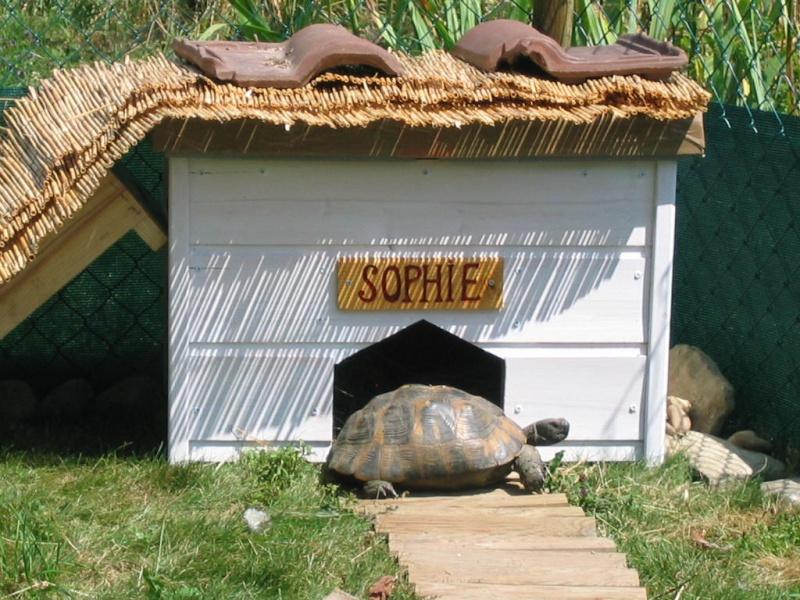 Fan aussi de tortues ! 24072010