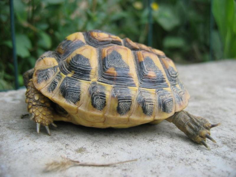 Fan aussi de tortues ! Casimo11