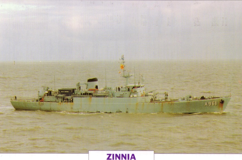 Photos du Zinnia - Page 3 Zinnia11
