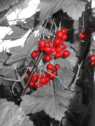 Belles images 20080710