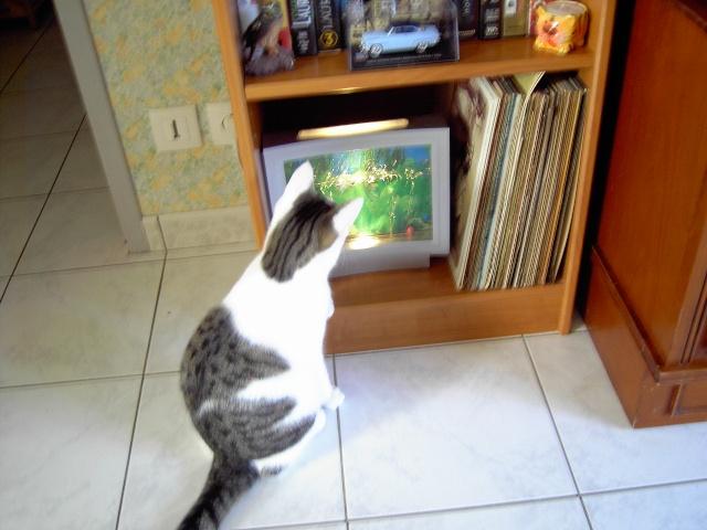achat pour chats Pict1010