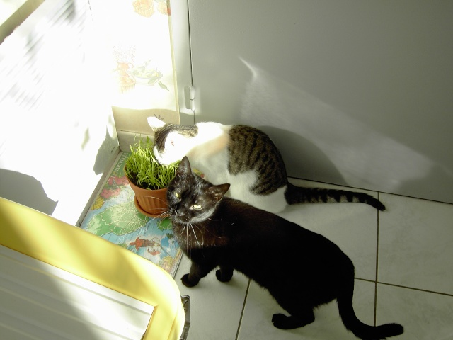 achat pour chats Pict1011