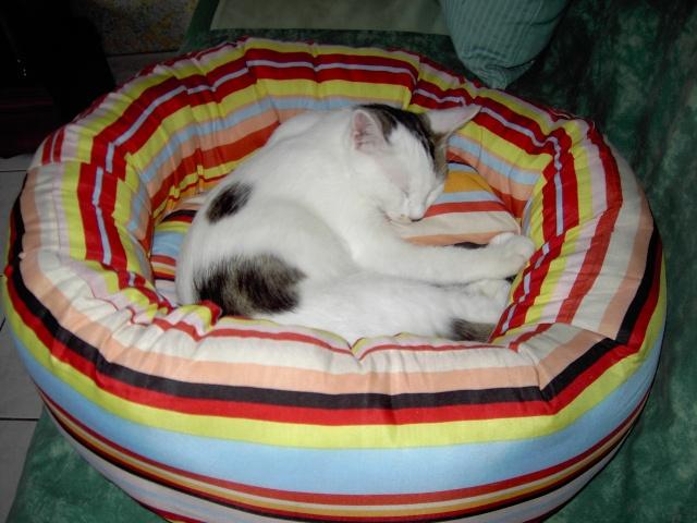 achat pour chats Pict1115