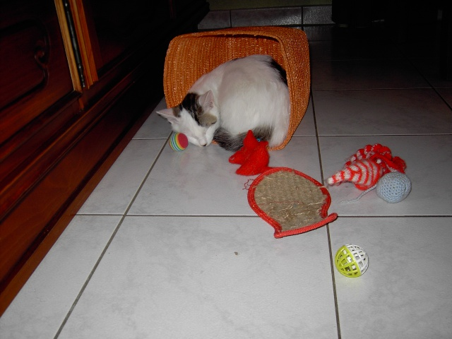 achat pour chats Pict1117