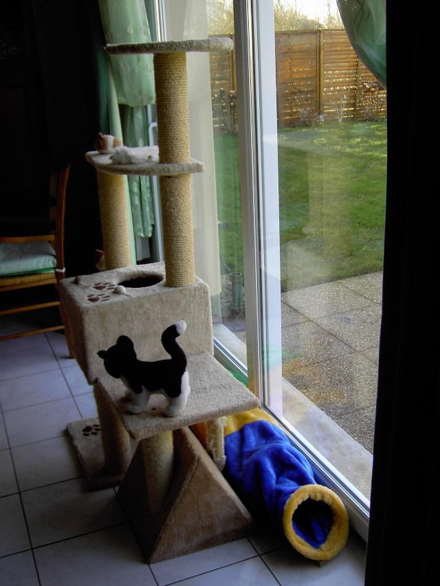 achat pour chats Pict1214