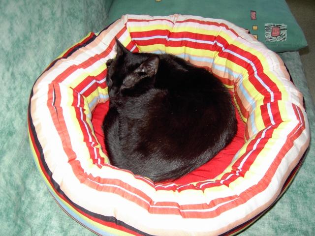 achat pour chats Pict1216