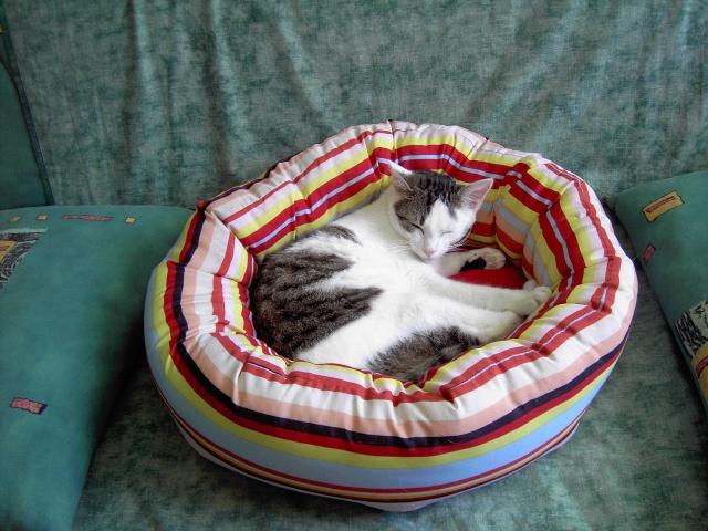 achat pour chats Pict1217