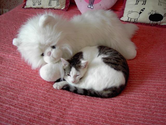 achat pour chats Pict1219