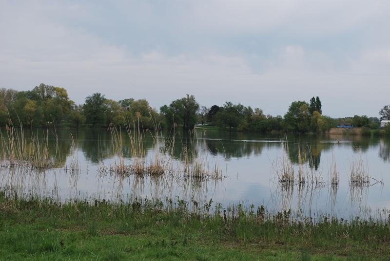 brochet en étang