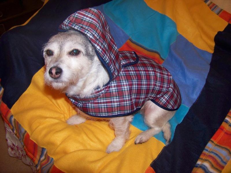 Manteau Imperméable à capuche écossais. 100_9810