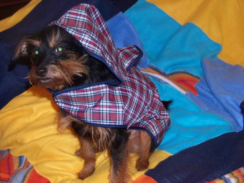 Manteau Imperméable à capuche écossais. 100_9811