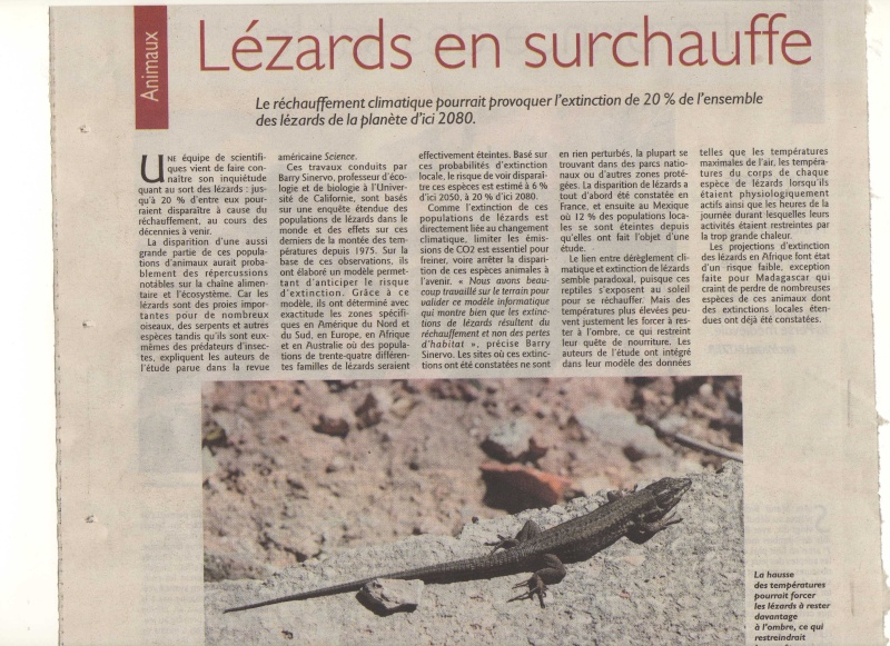 lézards en danger ... Img00710
