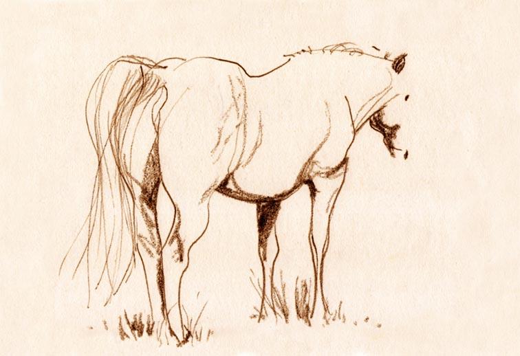 Les beaux dessins de chevaux Shogun10