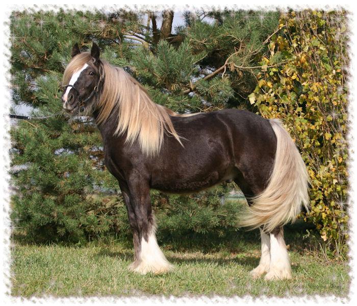 Robe de chevaux^^