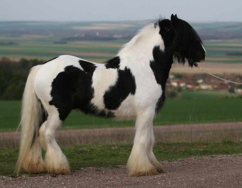 TINKY TOY, encore un cheval de rêves au Vallon... Tinky_12