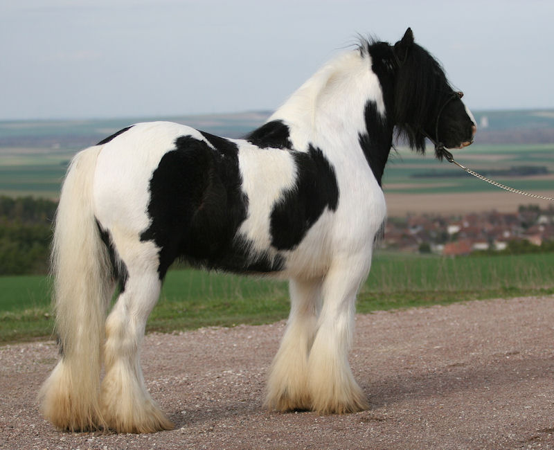 TINKY TOY, encore un cheval de rêves au Vallon... Tinky_14