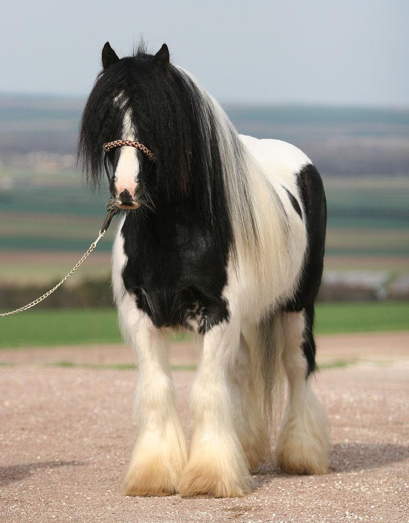 TINKY TOY, encore un cheval de rêves au Vallon... Tinky_16